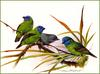 [Eric Shepherd's Beautiful Australian Birds Calendar 2002] Blue-Faced Finch