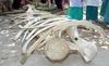 Researchers trying to verify bones [TheStar 2006-04-18]