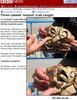 Three-clawed 'mutant' crab caught [BBC 2006-08-02]