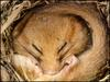 Dormice handlers needed for woods [BBC 2006-08-07]