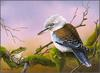 Eric Shepherd - Australian Birds 2007 - Blue-Winged Kookaburra