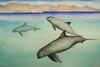 Small, Smaller, Smallest: The Plight Of The Vaquita [ScienceDaily 2006-12-11]