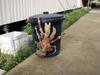 Ridiculously huge coconut crab