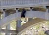 Beleaguered bear in bridge rescue [BBC 2007-09-30]