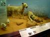 Tsavo maneaters - Wiki