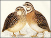 Research finds birdsong trigger [BBC 2008-03-19]