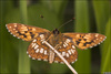 UK butterflies 'need good summer' [BBC 2008-04-24]