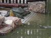 ...A Species' Final Hope - Yangtze giant softshell turtle (Rafetus swinhoei) [LiveScience 2008-05-2
