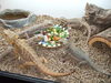 BEARDED DRAGONS BRUNCH