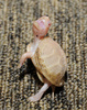 Albino Eastern Box Turtle (Terrapene carolina carolina)101