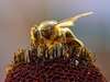 Jungle Animals: Bee