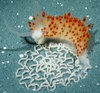 Marine Scientist Finds New Sea Slug Species [redOrbit 2010-09-23]