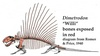 Ancient Tiger-Sized Predator Unearthed in Texas [LiveScience 2010-12-11]