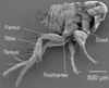 For High-Jumping Fleas, the Secret's in the Toes [LiveScience 2011-02-10]