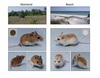 How Mice Got their Sandy Coats: Beach Life [LiveScience 2011-02-24]