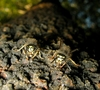 Angry Wasps Capture Intruding Ants, Fly Away, Airdrop Them [LiveScience 2011-03-29]