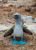 The 500 Cutest Animals - 23. Blue-footed Booby [LiveScience 2011-04-01]
