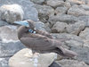 Secret Lives of Seabirds Revealed [LiveScience 2011-05-18]