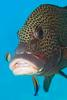 Hungry Female Fish May Have Sex Change On Its Mind [LiveScience 2011-06-14]
