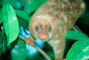 1,060 New Species Discovered in New Guinea  [LiveScience 2011-06-28]