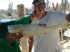 Cyclops Bull Shark captured in the Sea of Cortez, Mexico [ReefBuilders 2011-06-28]