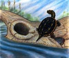 How Tough Turtles Survived Dino-Killing Meteor [LiveScience 2011-07-11]