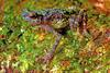 'Lost' Rainbow Toad Rediscovered After 87 Years [LiveScience 2011-07-13]
