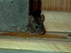 Freaky Mutant Mouse Steals Genes to Resist Poison [LiveScience 2011-07-21]