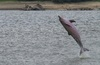 Dolphins' 'Sixth Sense' Helps Them Feel Electric Fields [LiveScience 2011-07-26]