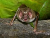 Vampire Bats 'See' Blood with Heat-Sensing Organs [LiveScience 2011-08-03]