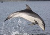 New Dolphin Species May Already Be at Risk [LiveScience 2011-09-19]