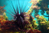 In Photos: Spooky Deep-Sea Creatures - Sea Urchin [LiveScience 2011-09-26]