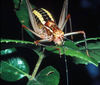 The Way to a Female Katydid's Heart? Offer Her Food [LiveScience 2011-09-27]