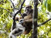 Monkey Moms Help Sons Get Babes [LiveScience 2011-11-08]