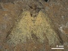 Ancient Moths Reveal Their True Colors [LiveScience 2011-11-15]