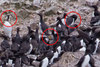 After Century's Absence, Seabirds' Return Surprises Scientists [LiveScience 2011-12-19]