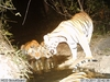 Rare Wildlife Caught By Camera Traps in Thailand [LiveScience 2011-12-20]