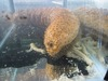 Digestive Acts of Sea Cucumbers May Be Dissolving Coral Reefs [LiveScience 2011-12-30]