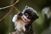 Funny Facial Features Tell Monkeys Who's Who [LiveScience 2012-01-10]