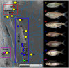 ...In Images: The Extraordinary Evolution of 'Blind' Cavefish - Mexican tetra or Blind Cave Fish (A