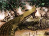Ancient Crocodile Wore Shield on Its Head [LiveScience 2012-01-31]