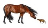 Ancient Warming Shrunk Horses to Housecat Size [LiveScience 2012-02-23]
