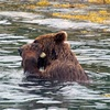 Brown Bear Tool Kit: A Rock for Scratching [LiveScience 2012-03-02]