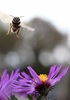 Thrill-Seeking Bees Reveal Link to Human Personality [LiveScience 2012-03-08]