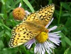Early Spring Is Bad News for Butterflies [LiveScience 2012-03-15]