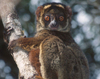 Species Hitched Ride to Madagascar on Floating Islands [LiveScience 2012-03-19]