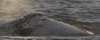 Rare Russian Whale Tracked to Mexico, a First for Science [LiveScience 2012-03-20]