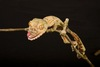 ...In Photos: The Wacky Animals of Madagascar - Common Leaf-tailed Gecko (Uroplatus fimbriatus) [Li