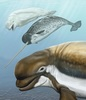 Ancient Beluga Whales Enjoyed Warm Waters [LiveScience 2012-03-26]
