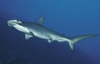 Newly Discovered Hammerhead Shark's 'Twin' Sparks Concern [LiveScience 2012-03-27]